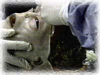Autopsia a Extraterrestre 1